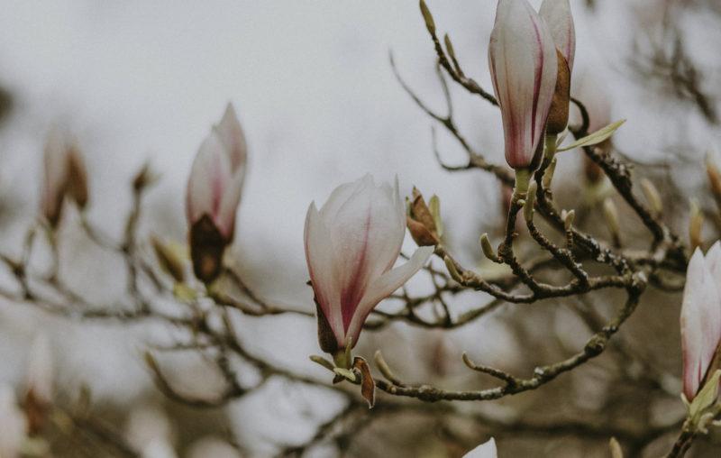 Cercare casa a Parigi: magnolia